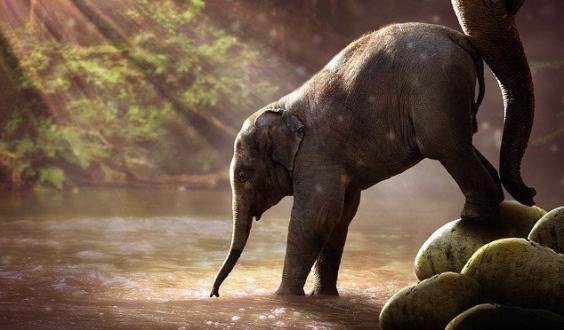 kerala-elephant- death